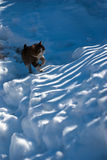 Streukatze im Schnee Lizenzfreie Stockbilder