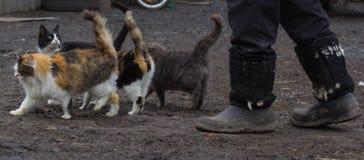 Streukatzen, die auf die Straße gehen Stockbilder