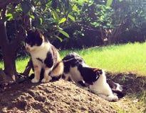 Streukatzen, die in der Sonne sich aalen Stockfotografie