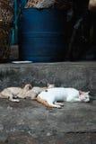 Streukatzen, die am lokalen Markt schlafen Stockfotos
