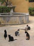Streukatzen und ein Brunnen Stockbild