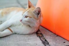 Streukatzenschlafen stock video