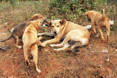 Streumutterhund und -welpen Stockfotografie
