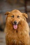 Streunende Hunde der Insel von La Palma Lizenzfreies Stockfoto