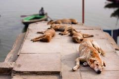 Streunende Hunde, die in der Sonne nahe der Flussbank in der indischen Stadt schlafen Stockfoto