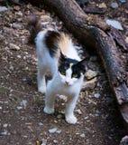 Streunende Katze Stockfotografie