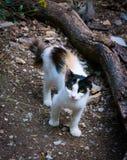 Streunende Katze Lizenzfreies Stockbild