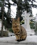 Streunende Katze Stockbild