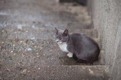 Streunende Katze in der Straße stockbild