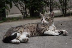 Streunende Katze, die im Hinterhof liegt stockfotos
