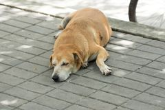 Streunender Hund Stockfotografie