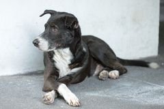 Streunender Hund Lizenzfreie Stockfotografie