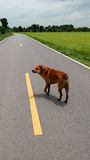 Streunender Hund Lizenzfreie Stockfotos