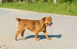Streunender Hund stockfoto