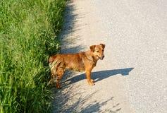 Streunender Hund Lizenzfreie Stockbilder
