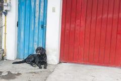 Streunender Hund Stockfotos