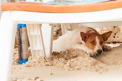 Streunender Hund auf dem Strand, liegend unter Sonnenbetten im Sand und verstecken sich von der Sonne, Hitze lizenzfreie stockfotos