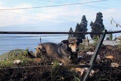 Streunender Hund auf den Stadtränden der Stadt Stockfotos