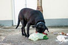Streunender Hund, der Abfall von den Behältern isst Stockfotos