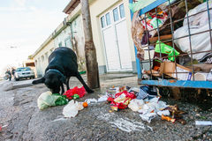 Streunender Hund, der Abfall von den Behältern isst Lizenzfreie Stockfotografie