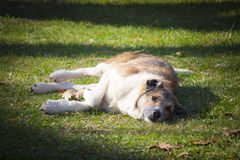 Streunender Hund, der auf dem Gras stillsteht Stockfotos