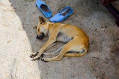 Streunender Hund, der auf dem sandigen Strand schläft stockbild