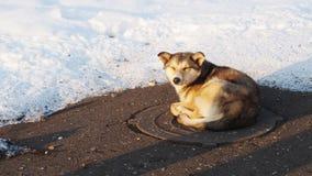 Streunender Hund, der auf der Abwasserkanalluke im Winter sich aalt Lizenzfreie Stockfotos