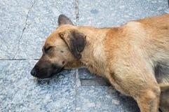 Streunender Hund, der auf der Pflasterung liegt Stockfoto
