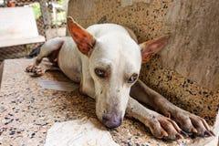 Streunender Hund, der in der Grundlage, Thailand - selektiver Fokus das Gesicht traurig sich fühlt Stockfoto