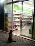 Streunender Hund, der durch Supermarkteingang sitzt stockfoto