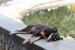 Streunender Hund, der friedlich in einem Park schläft stockbilder