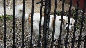 Streunender Hund, der 4K mit Audio abstreift stock video footage