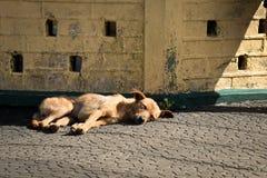 Streunender Hund in der Sonne Lizenzfreie Stockfotos