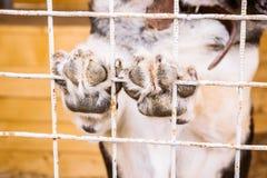 Streunender Hund, der Tatzen auf Käfig hält Lizenzfreie Stockbilder