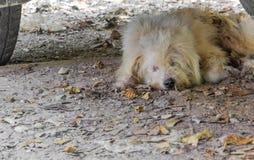 Streunender Hund, der unter einem parkendes Auto schläft lizenzfreies stockbild