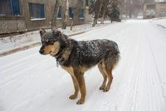 Streunender Hund in einem Schneesturm auf einer Stadtstraße Stockbild