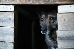 Streunender Hund in einer Holzkiste stockbilder