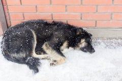 Streunender Hund friert im Winter in der Kälte ein lizenzfreies stockfoto