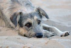 Streunender Hund liegt auf dem Strand Stockfotografie