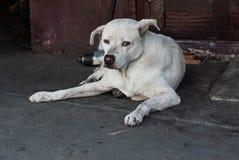 Streunender Hund in Thailand Lizenzfreies Stockfoto