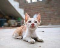 Strevend naar kat eet iets voor stock fotografie