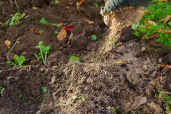 Manual garden fertilizing. stock images