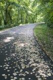 strewn дорога листьев Стоковое фото RF