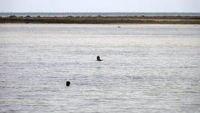 Striated Heron Bird Butorides Striata in Flying Above Water