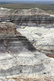 Striated Petrified Forest Stock Image