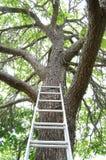 Strichleiter, die zu einem Baum steigt Stockfotografie