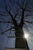 Strichleiter in einem Baum Stockfotografie