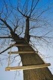 Strichleiter in einem Baum Lizenzfreies Stockbild