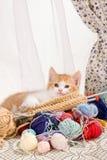Strickendes Kätzchen Stockbilder