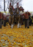 Strid av apelsinen Royaltyfria Bilder